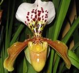 orquideas_1