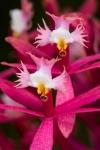 orquideas_2
