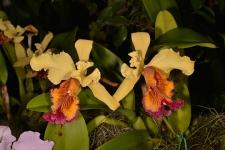 orquideas_3