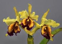orquideas_6