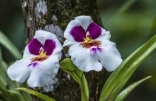 orquideas_8