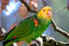 Avistamiento de aves_1