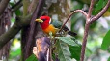 Colombia es campeona mundial en avistamiento de aves