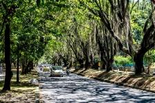 El hermoso túnel verde que se busca preservar en Envigado