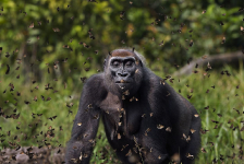 Fotos ganadoras del concurso The Nature Conservancy