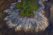 Mención Honorífica, Paisaje. COLOR DE LA VIDA Manglares verdes se alinean en las marismas acentuadas por las aguas de las mareas y los meses de lluvia que llenan la cuenca artesiana. Golfo de Carpentaria. Australia. Autor: Scott Portelli.