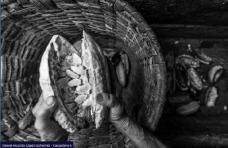 Cacaotera - Premio Trabajo Rural en Colombia_4
