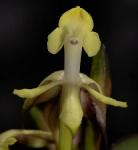 nuevas orquídeas_2