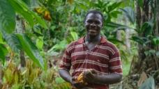 Un tumaqueño endulza el paladar de los japoneses con su cacao
